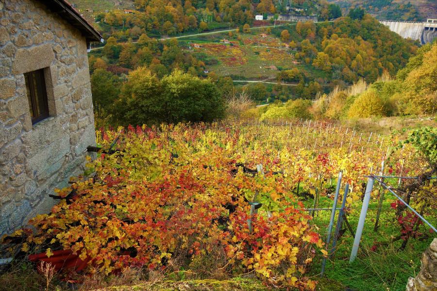 Camino de Santiago wine