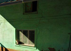 Kitten on Camino Frances