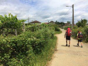 Walking Camino with Kids